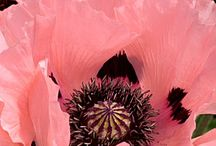 flowers / by Elisabeth Doherty