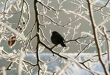 WINTER SOLSTICE / All things that feel like winter / by Pam Stovall
