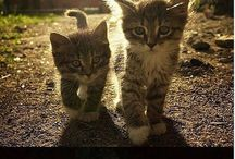 Cute Kittyyys / by Madilyn Rider