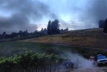 Sonoma Coast Harvest / by Joseph Phelps Vineyards