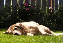 Dog friendly yard/recipes/beds/etc / by Evangeline L