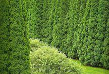 Gardens / by Danae Jeanes
