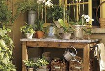 Organic & garden  / by