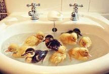 Ducklings  / by Melissa Perryman