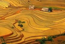 Vietnam / by Dang Nguyen
