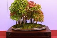 Bonsai is Beautiful / by Raychel A