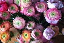 Flowers / by Lisa Katherine