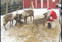 Christmas / by Brenda Tutje