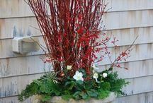Winter Container Ideas / ideas from Avant Gardens http://gardenforeplay.avantgardensne.com/?p=2696#  / by Avant Gardens
