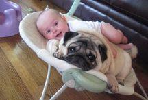 Sweet pups / by Melissa Sorensen