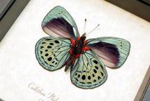 Schmetterlinge / by Mareike Scharmer