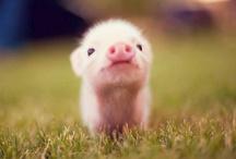 Swine swooning / by Monique Zandstra-Mugg