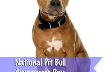 Pet Holidays / by DogTipper.com