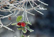 Winter / by Karen Manders