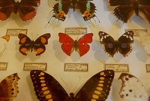 Flutter / by Forgotten Stitches