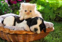 Cute Puppies / by Lance Ringler