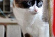 kitty cats / by Ginny Harris