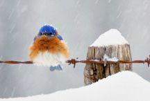 Winter  Wonderland / by Peg Schoening
