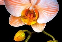 Orchid / by San Regina