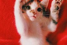 Cute Animals!!!! / by Birdieboo