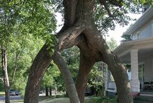 Trees / by RogerandJanice Jessie