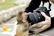 Monkeys, Gorillas, Orangutans, and Chimps / by AnimalBehaviorC
