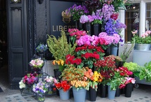 I love flowers / by Debbie Higgs