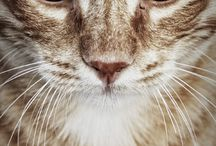 CATS  / by Bonnie Merchant