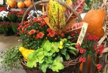 Fall Ideas / by Rice's Nursery