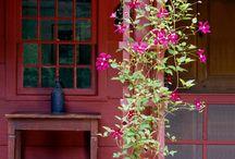 all outdoor & garden ideas  / by Patti Knick