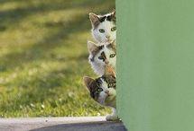 Cute & funny Cats / by Venetia Marshall