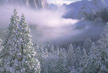 Winter Wonderland  / by Natosha Buchanan