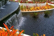 Public Gardens / by Tina Koral