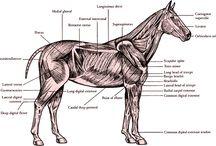 veterinary medicine / by Nicole Maertzig