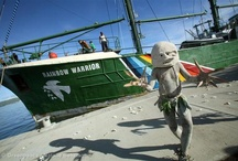 The Rainbow Warrior / A collection of images around the world of Greenpeace's iconic ship, the Rainbow Warrior. There have been 3 Rainbow Warriors during the 40+ years of Greenpeace history. The current one is the first ship in our fleet designed and built specifically for Greenpeace. That means the Rainbow Warrior is not just one of the most environmentally-friendly ships ever made; she's also a campaigner's dream. We are thrilled she's now fighting with us for a green and peaceful future. / by Greenpeace Australia Pacific