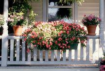 Porch ideas / by Elaine Schnell