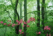 Arbres / by Blanche Bechoff