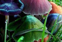 fungi / by Krysta Robinson