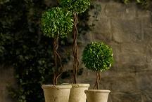 Plants & Garden / by Victor Martinez