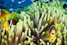 #fightforthereef / Rettet das Great Barrier Reef! www.wwf.de/great-barrier-reef/ / by WWF Deutschland