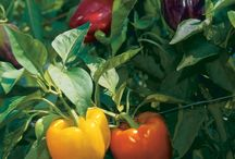 Peppers / by gardenlady