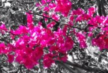 Love Pink / by Carla Hamilton