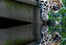 Animals / by Kelley