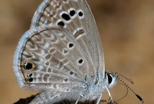 Butterflies / My goal is to catch one butterfly each year :-) / Gods visible angels ♥PIN ALL YOU WANT.  / by Cynthia Kelly