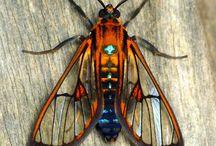 Insekten, Käfer und... / by Mareike Scharmer