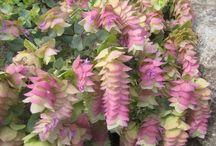 Garden Flowers n stuff / by Linda Rewa