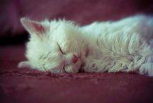 Furry Friends / by Siti Nur Azlin