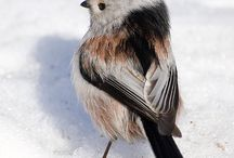 Ornithology  / by Sean Robbins