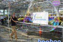History of Big Bubbles / History of Big Bubbles / by Extreme Bubbles, Inc.