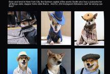 Desinger Dogs / by VetShopMax.Com